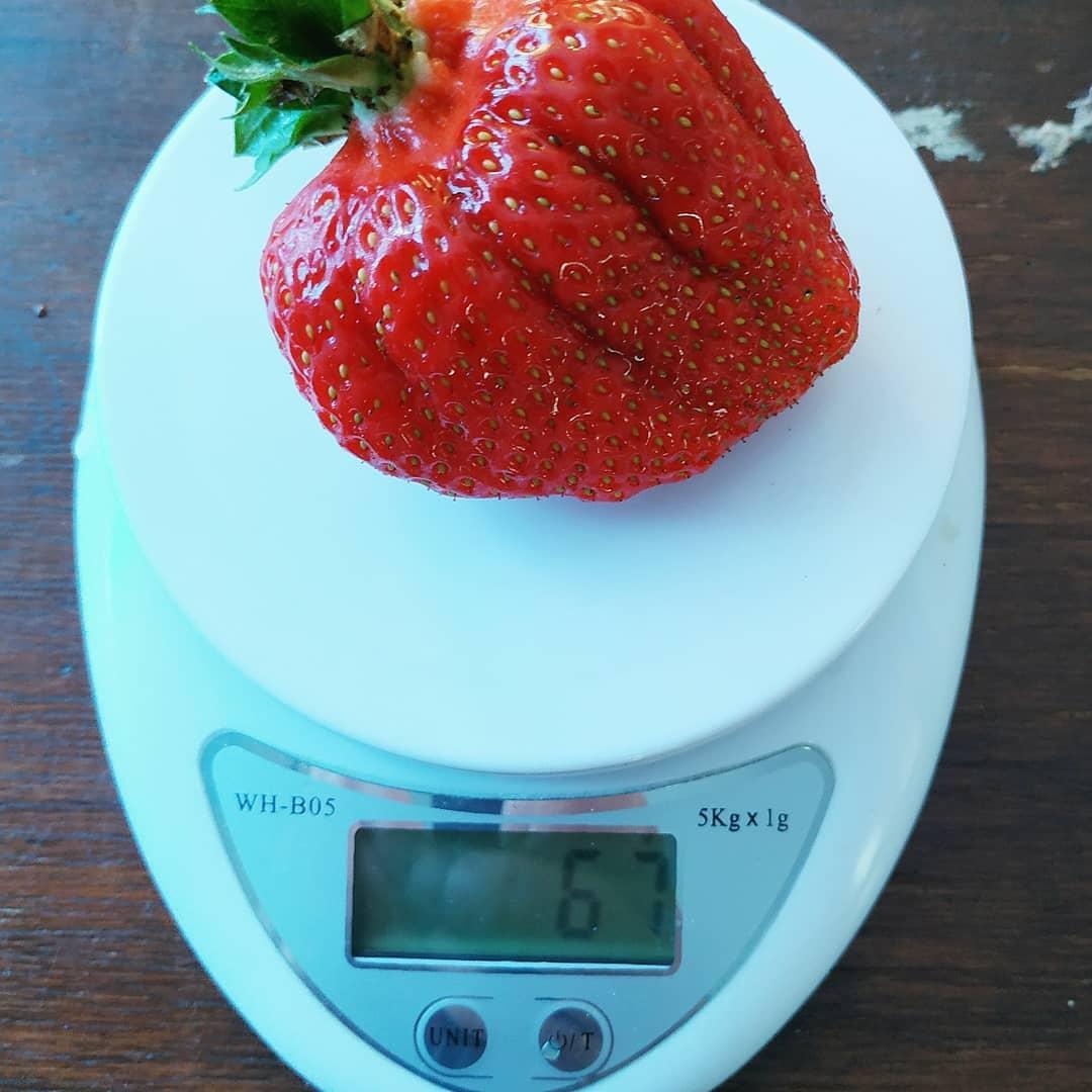 10 самых урожайных сортов клубники с сочными и вкусными ягодами: характеристики, достоинства и недостатки